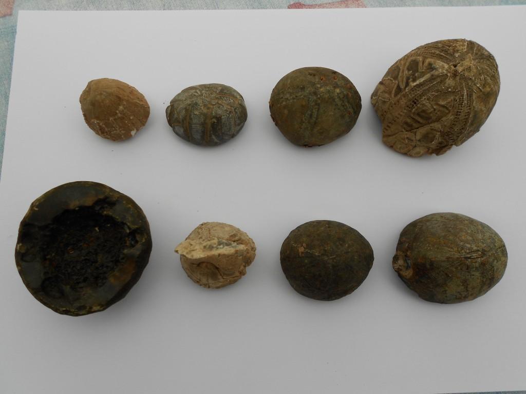 Fossils found in 32 NHL garden